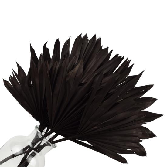 szárazvirág