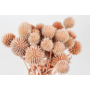 Kép 4/4 - Szárazvirág - Echynops - szamárkenyér - lazac