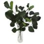 Kép 2/5 - eukaliptusz