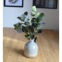 Kép 4/5 - eukaliptusz