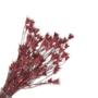Kép 1/2 - szárazvirág