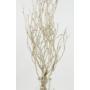 Kép 3/4 - szárított növény