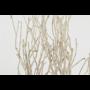 Kép 4/4 - szárított növény