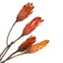 Kép 1/4 - szárazvirág
