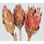 Kép 2/3 - szárított virág
