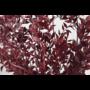 Kép 3/3 - szárazvirág